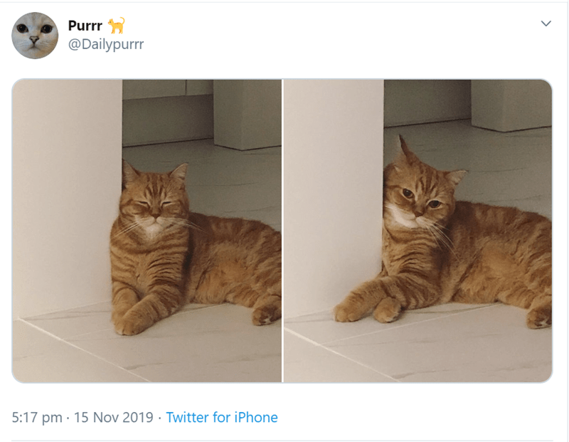 Cat - Purrr @Dailypurrr 5:17 pm 15 Nov 2019 Twitter for iPhone