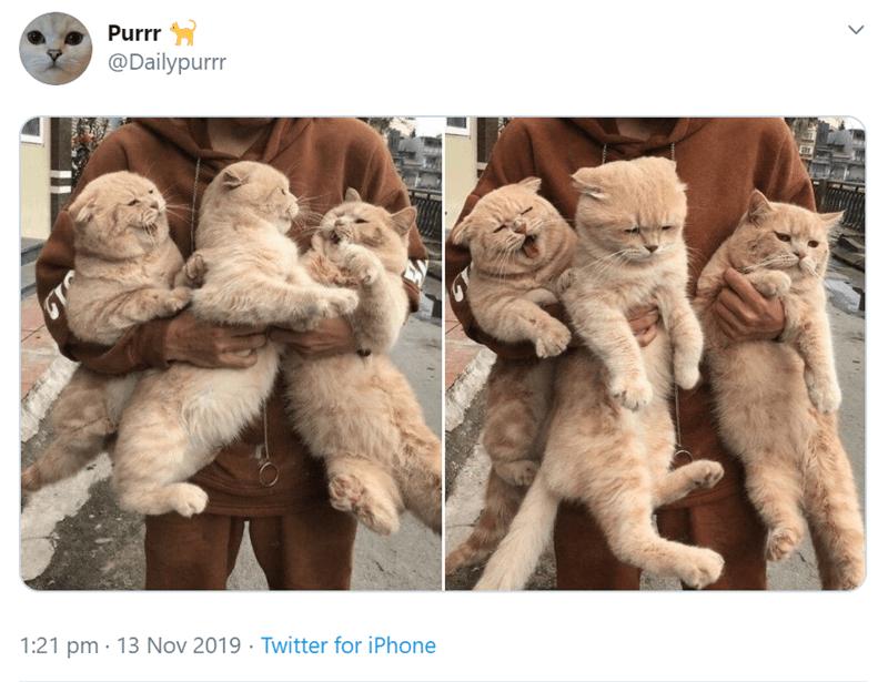 Fur - Purrr @Dailypurr 1:21 pm 13 Nov 2019 Twitter for iPhone >