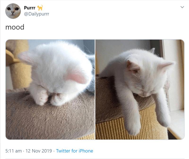 Cat - Purrr @Dailypurrr mood 5:11 am 12 Nov 2019 Twitter for iPhone