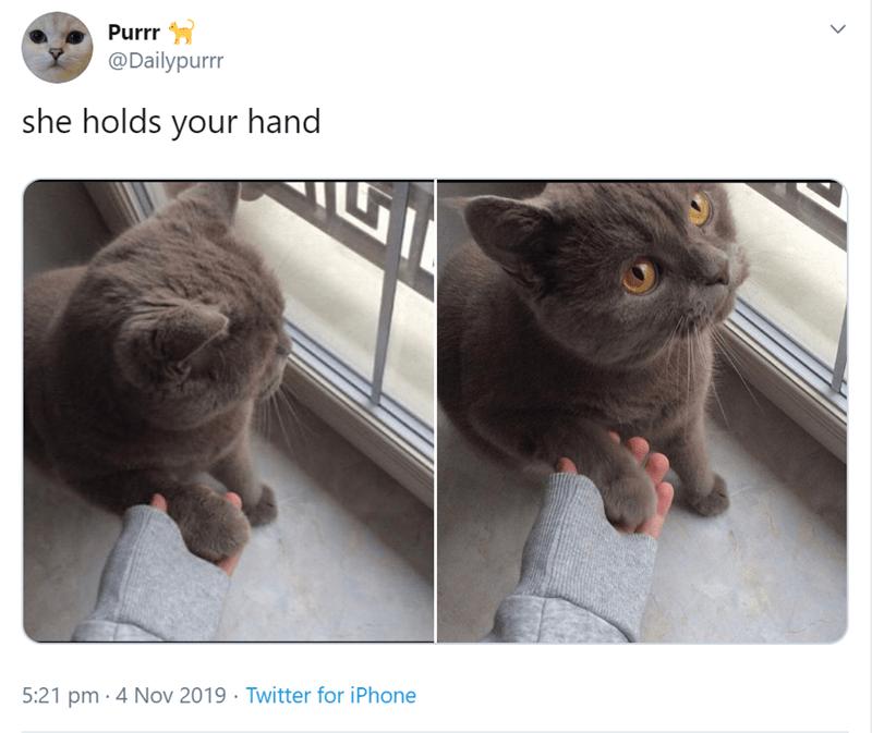 Cat - Purrr @Dailypurrr she holds your hand 5:21 pm 4 Nov 2019 Twitter for iPhone