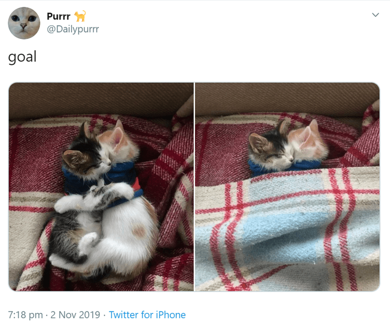 Canidae - Purrr @Dailypurrr goal 7:18 pm 2 Nov 2019 Twitter for iPhone