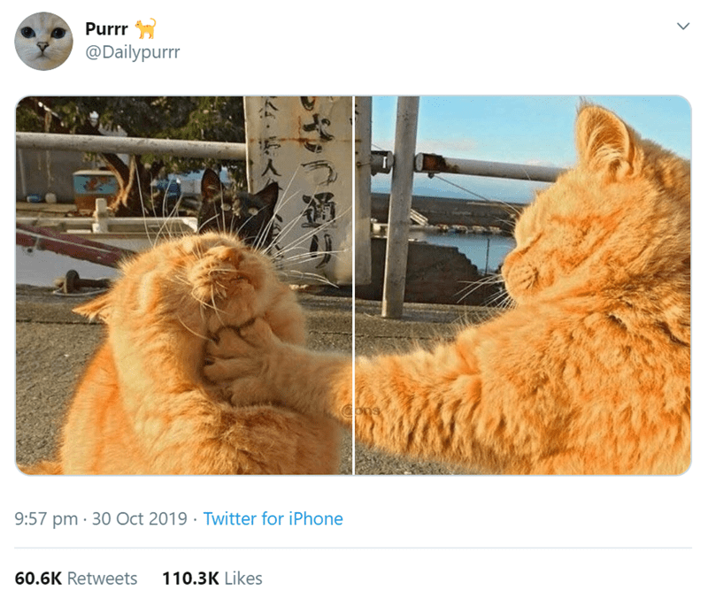 Cat - Purrr @Dailypurr Cons 9:57 pm 30 Oct 2019 Twitter for iPhone 110.3K Likes 60.6K Retweets >