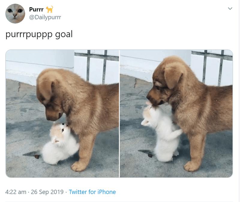 Dog - Purrr @Dailypurrr purrrpuppp goal 4:22 am 26 Sep 2019 Twitter for iPhone