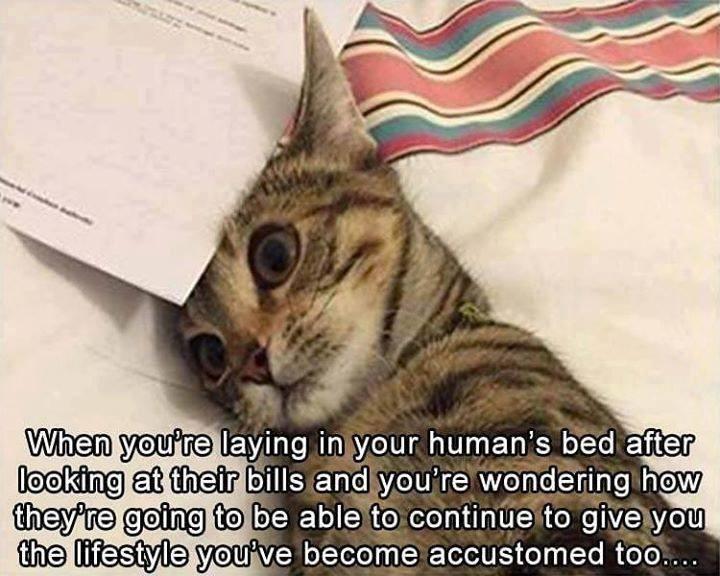 cat memes - 9390930176