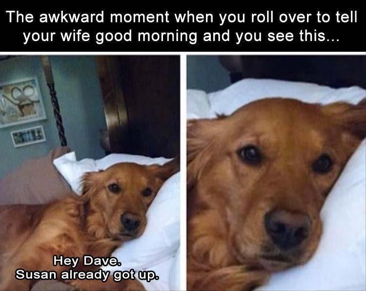 dog memes - 9390938624
