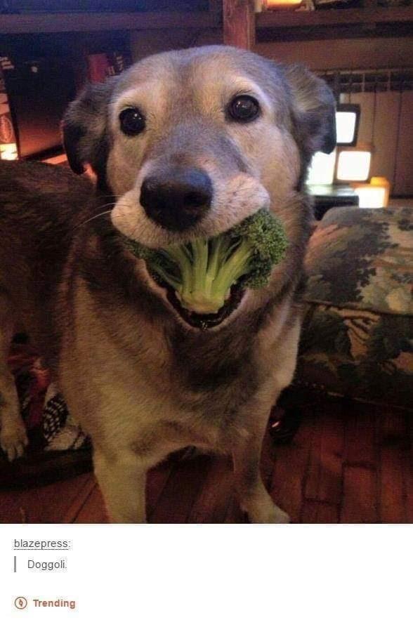 Dog - blazepress: Doggoli. O Trending