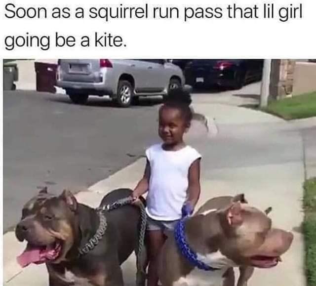 Dog - Soon as a squirrel run pass that lil girl going be a kite. 9