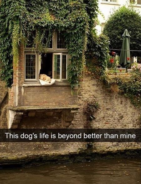 Property - This dog's life is beyond better than mine
