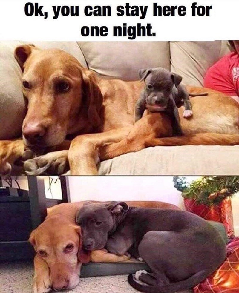 Dog - Ok, you can stay here for one night.