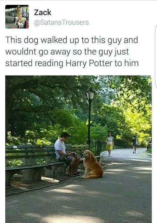 Tree - Zack @Satans Trousers This dog walked up to this guy and wouldnt go away so the guy just started reading Harry Potter to him