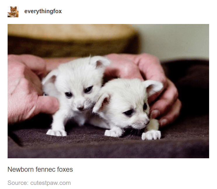 Puppy - everythingfox Newborn fennec foxes Source: cutestpaw.com