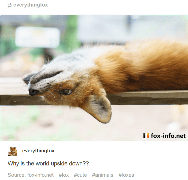 Wildlife - everythingfox fox-info.net everythingfox Why is the world upside down?? Source: fox-info.net #fox #cute #animals #foxes