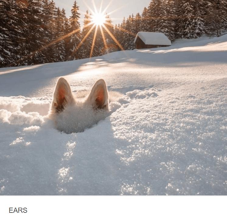 Snow - EARS
