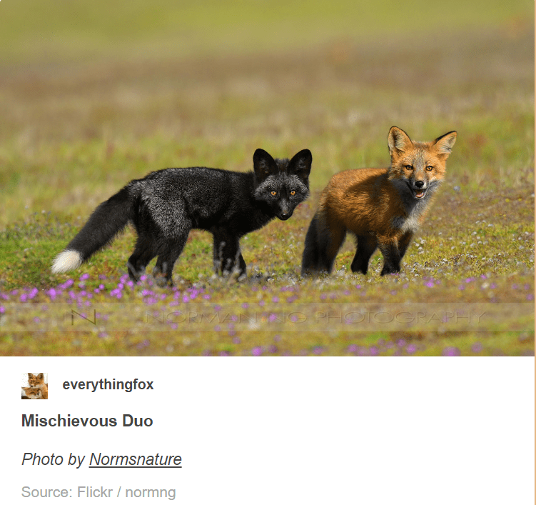 Mammal - PHOTOGRAPH AART everythingfox Mischievous Duo Photo by Normsnature Source: Flickr /normng