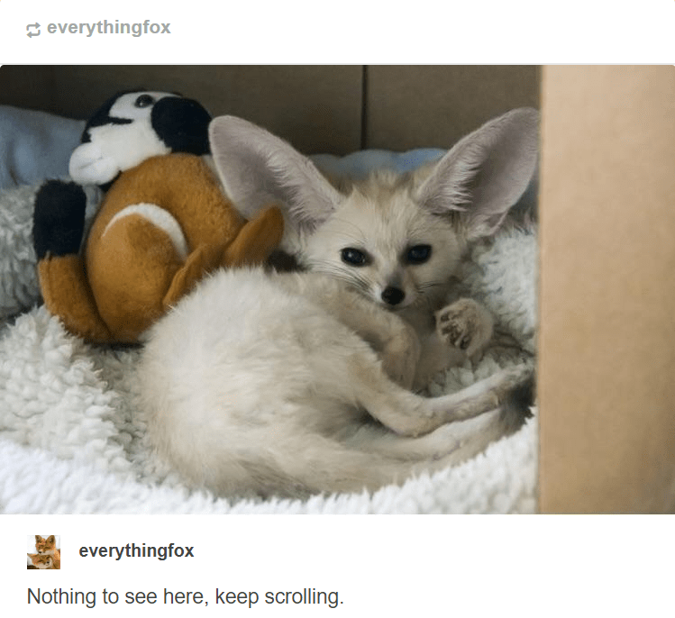 Fennec fox - everythingfox everythingfox Nothing to see here, keep scrolling.
