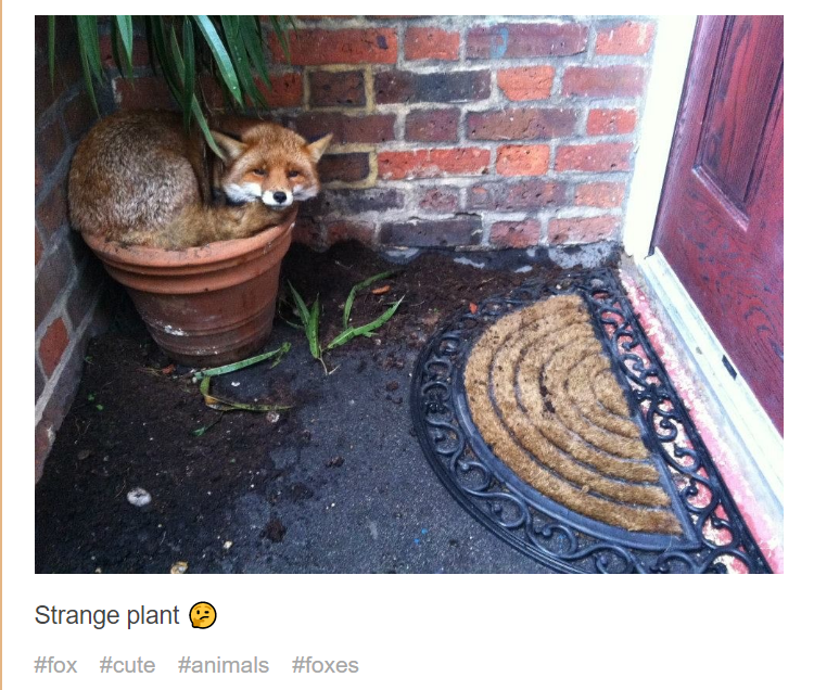Floor - Strange plant #fox #cute #animals #foxes
