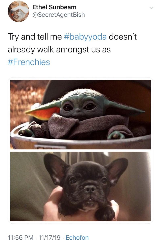Pug - Ethel Sunbeam @SecretAgentBish Try and tell me #babyyoda doesn't already walk amongst us as #Frenchies 11:56 PM 11/17/19 Echofon