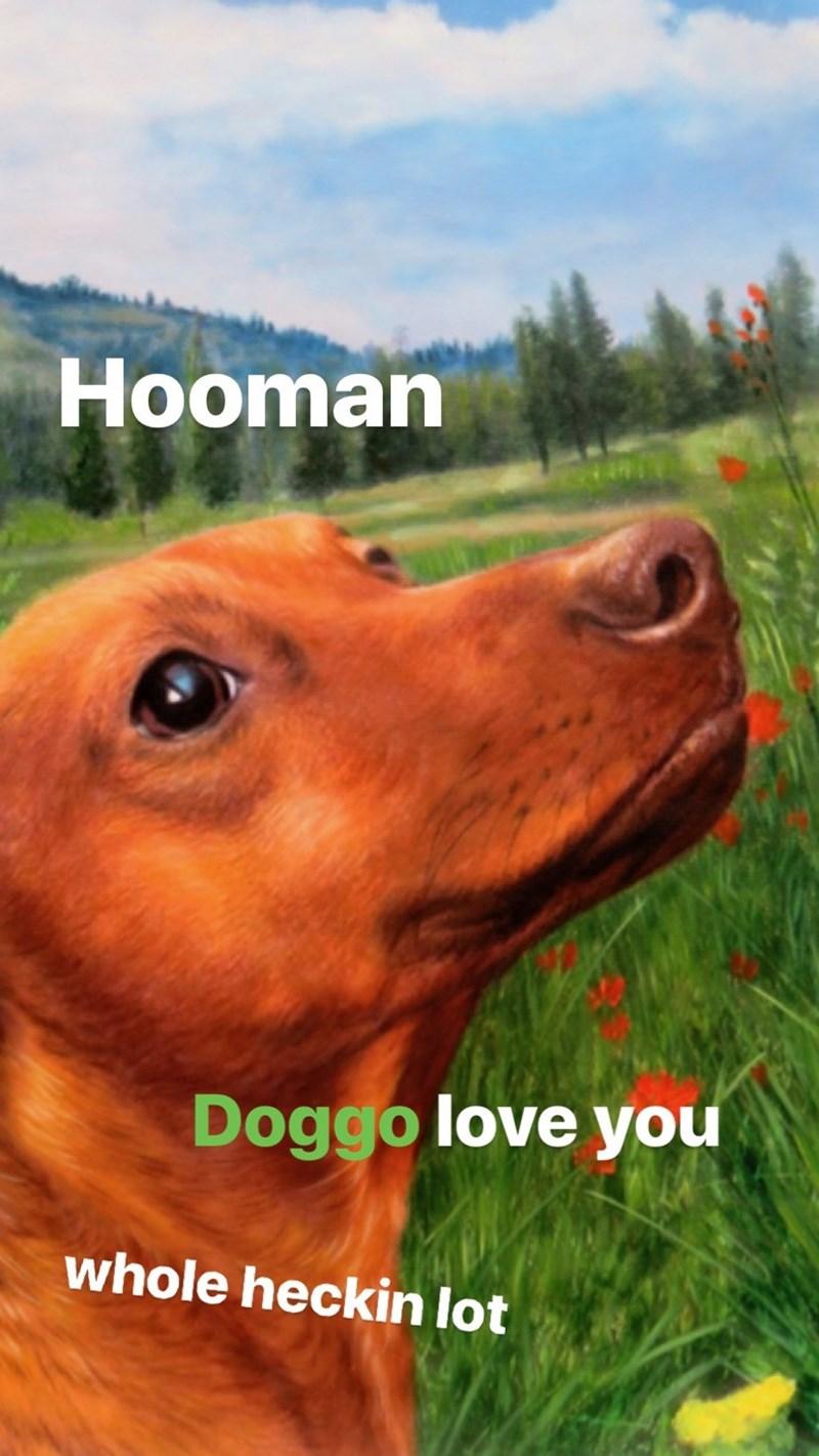 Vertebrate - Hooman Doggo love you whole heckin lot