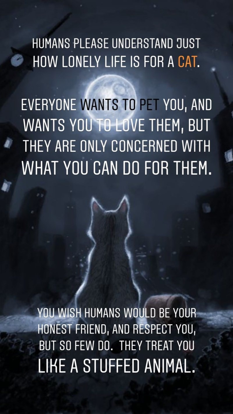 Sky - HUMANS PLEASE UNDERSTAND JUST HOW LONELY LIFE IS FOR A CAT. EVERYONE WANTS TO PET YOU, AND WANTS YOU TO LOVE THEM, BUT THEY ARE ONLY CONCERNED WITH WHAT YOU CAN DO FOR THEM. YOU WISH HUMANS WOULD BE YOUR HONEST FRIEND, AND RESPECT YOU, BUT SO FEW DO. THEY TREAT YOU LIKE A STUFFED ANIMAL.
