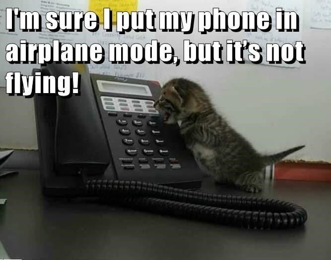 Whiskers - l'm sure Iput my phone in airplane mode, but it's not flying! 7