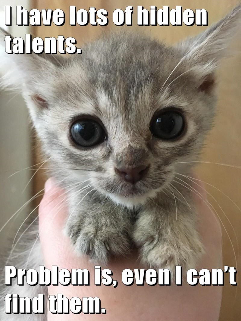 Cat - I have lots of hidden talents. Problem is, evenI can't find them.