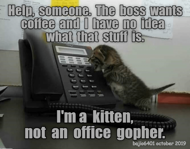 Photo caption - Help, someone. The boss wants coffee and O have no idea what that stuff is. I'm a kitten, not an office gopher. bajio6401 october 2019