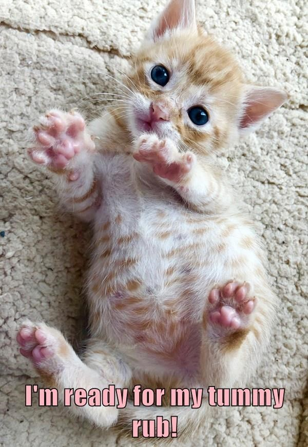 Cat - I'm ready for my tummy rub!