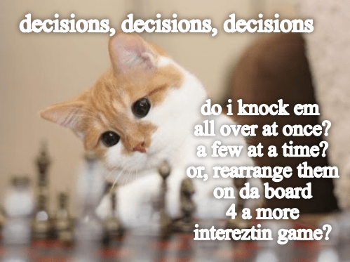 Cat - decisions,decisions, decisions do i knock em all over at once? a few at a time? or, rearrange them on da board 4a more intereztin game?