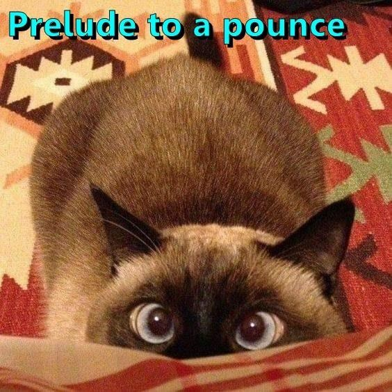 Cat - Prelude to a pounce