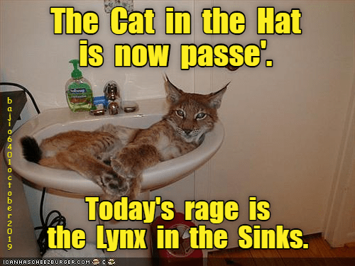 Cat - The Cat in the Hat is now passe Today's rage is the Lynx in the Sinks. ICANHASCHEE2BURGER CcOM bajioo01oC OernO-Ov