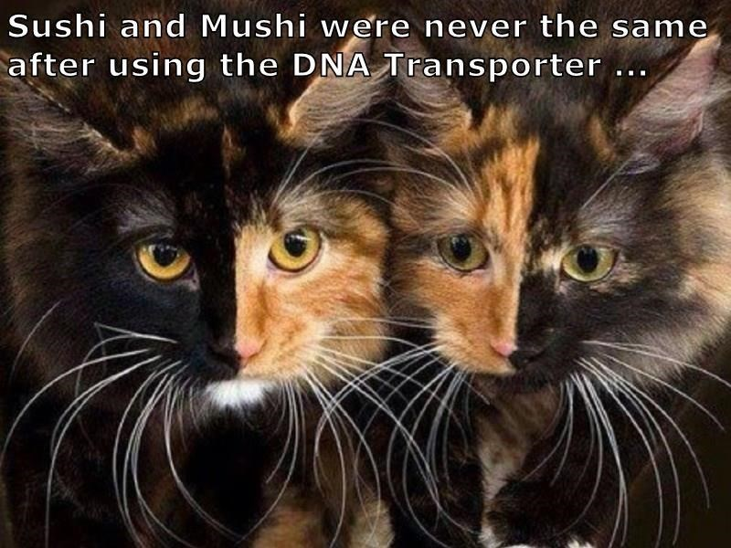 Cat - Sushi and Mushi were never the same after using the DNA Transporter..
