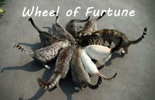 Organism - Wheel of Furtune