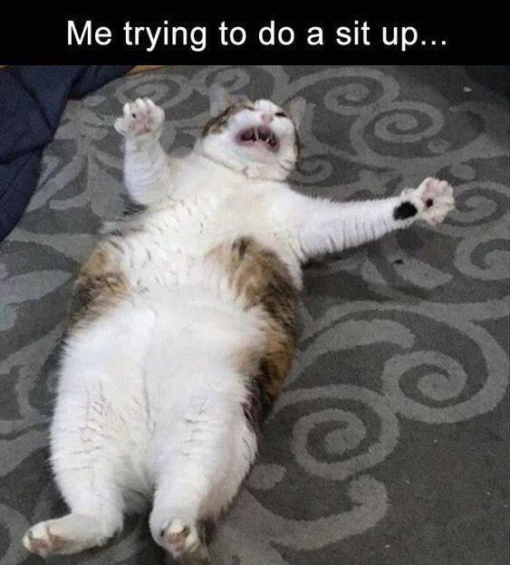 cat memes - 9391723520