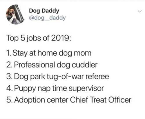 dog memes - 9391725056