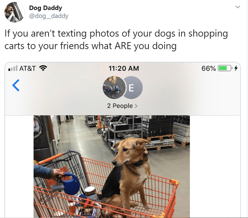 Dog - Dog Daddy @dog_daddy If you aren't texting photos of your dogs in shopping carts to your friends what ARE you doing 66% AT&T 11:20 AM E 2 People>