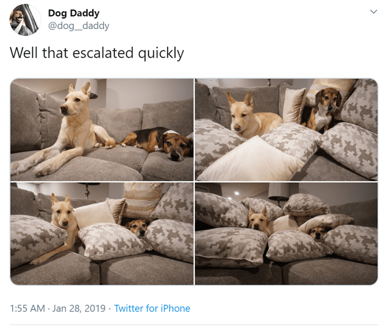 Companion dog - Dog Daddy @dog_daddy Well that escalated quickly 1:55 AM Jan 28, 2019 Twitter for iPhone