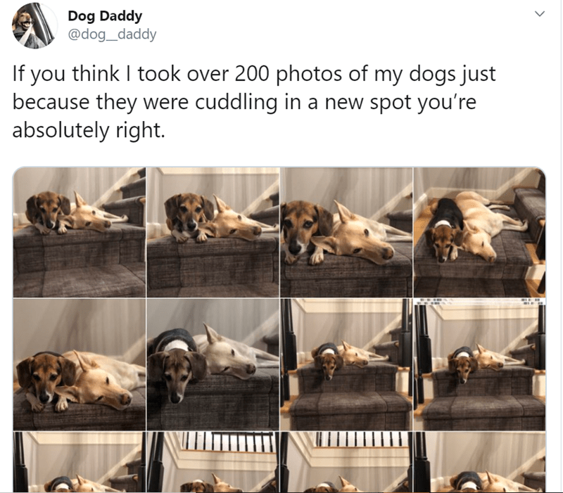 Text - Dog Daddy @dog_daddy If you think I took over 200 photos of my dogs just because they were cuddling in a new spot you're absolutely right.