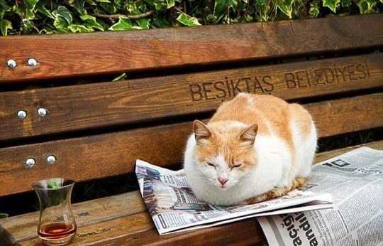 Cat - BESTAS BEOMES açiğ