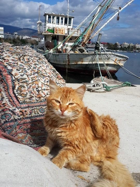 Cat - KARDELE BLIZM