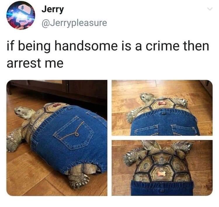 animal memes - 9391782912