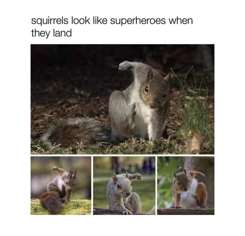 Wildlife - squirrels look like superheroes when they land