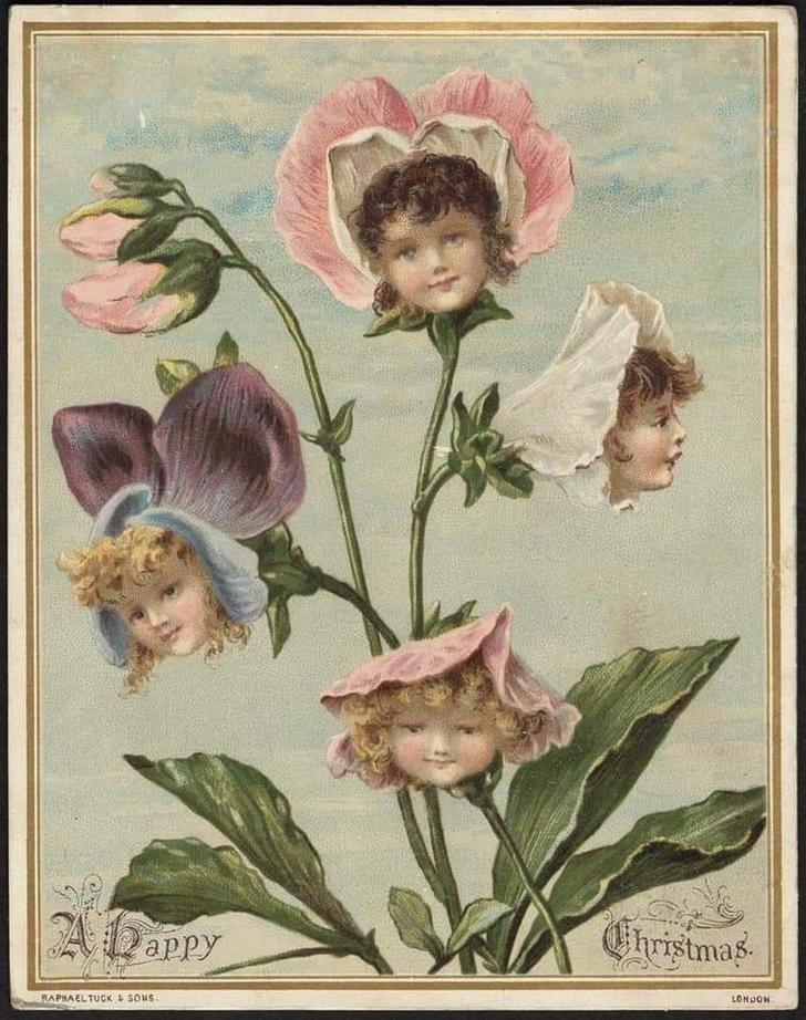 Flower - Christmas ADappy LONDON RAPHAELTUCK SONS