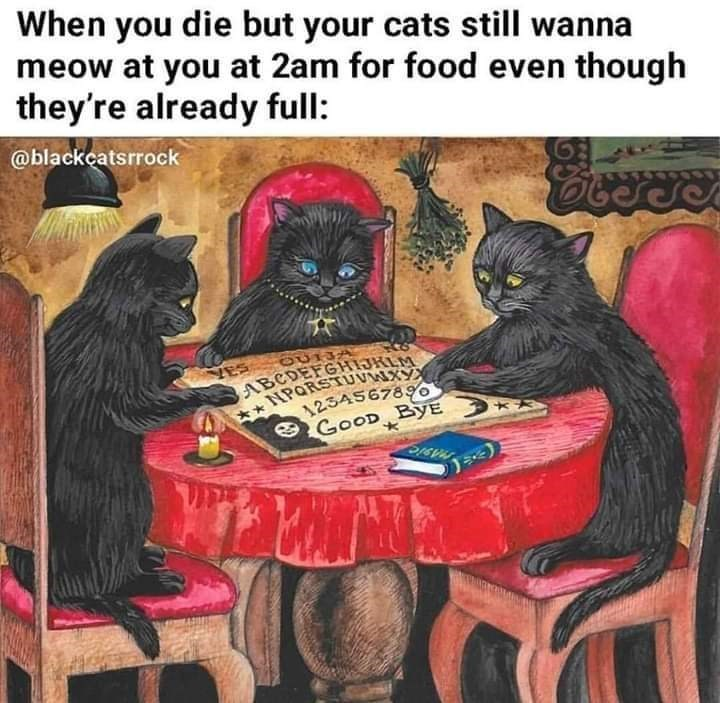 Games - When you die but your cats still wanna meow at you at 2am for food even though they're already full: @blackcatsrrock ES ABCDEFGHJRLM NPORSTUVNA 254567890 GOOD ByE