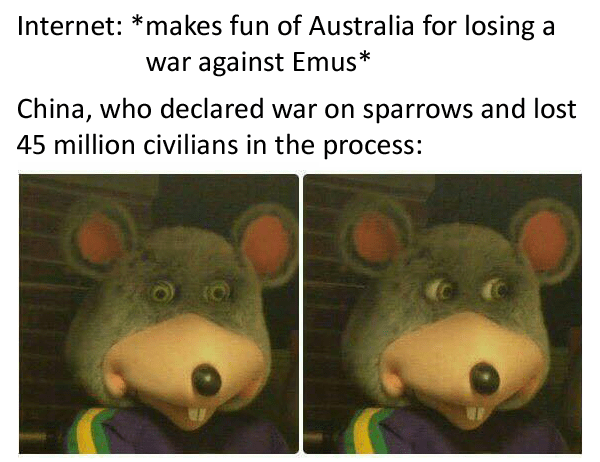 Text - Internet: *makes fun of Australia for losing a war against Emus* China, who declared war on sparrows and lost 45 million civilians in the process: