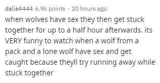 Text - dalia4444 6.9k points 20 hours ago when wolves have sex they then get stuck together for up to a half hour afterwards. its VERY funny to watch when a wolf froma pack and a lone wolf have sex and get caught because theyll try running away while stuck together