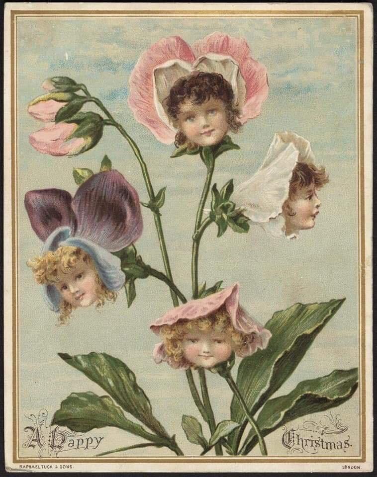 Flower - Christmas ZADaPpy LONDON RAPHAELTUCK &SONS