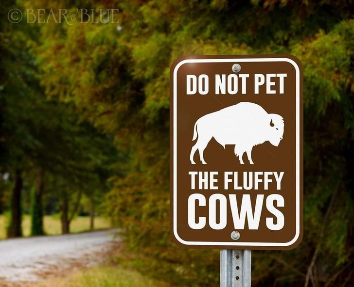 Signage - OBEAR BLUE DO NOT PET THE FLUFFY COWS