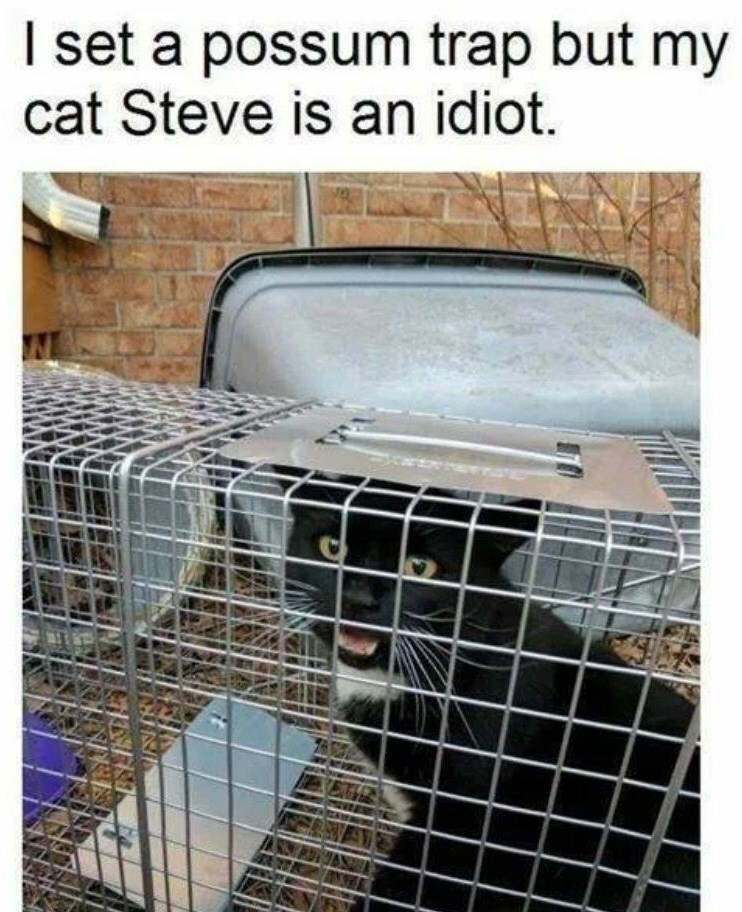 Cage - I set a possum trap but my cat Steve is an idiot