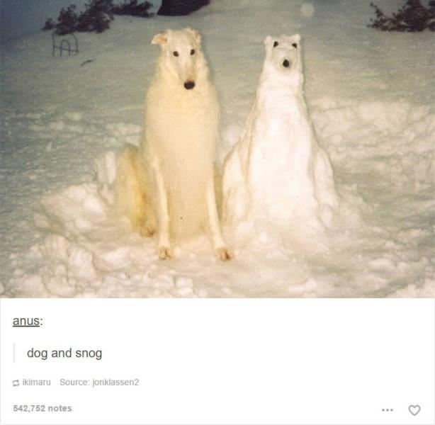 Borzoi - anus: dog and snog ikimaru Source: jonklassen2 542,752 notes