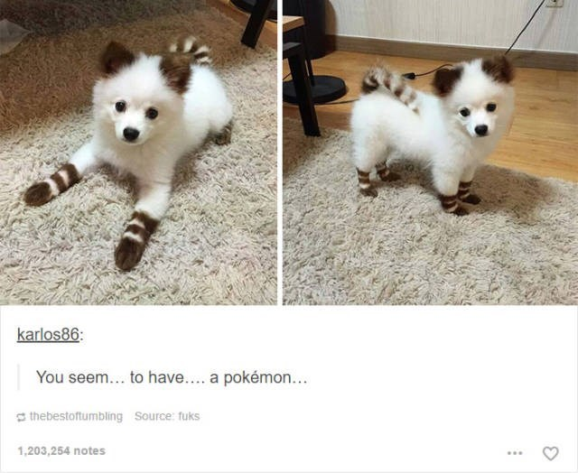 Mammal - karlos86 You seem... to have... a pokémon... thebestoftumbling Source: fuks 1,203,254 notes